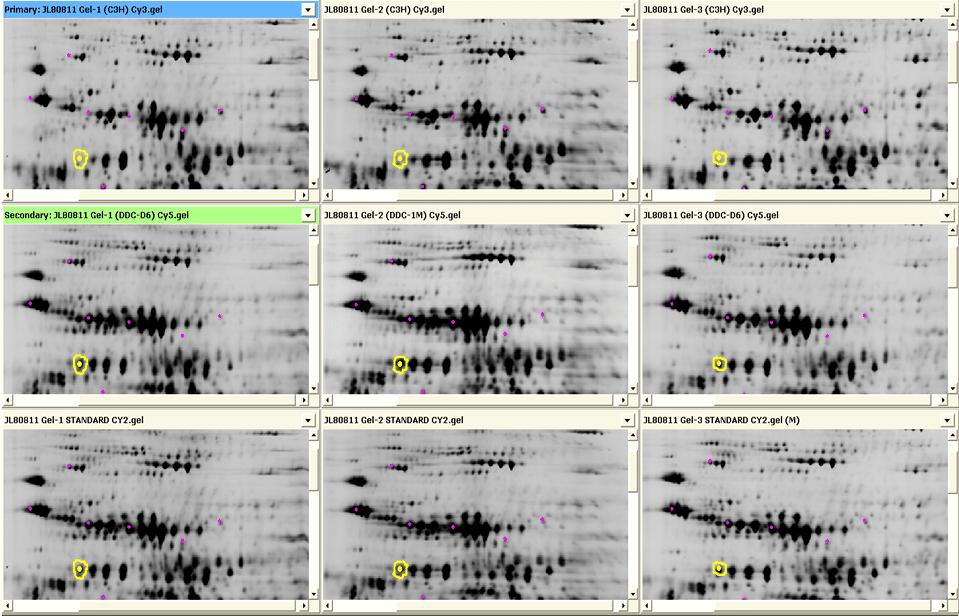 2D DIGE spot matching for cross-gel analysis