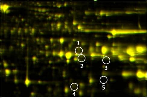 Phosphoproteomics study design A: Control/Test overlay image