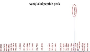 Acetylation Site Identification Procedure: step 3B: MS showing the acetylated peptide peak