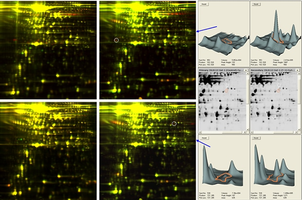 2D DIGE mouse serum proteome images: improved resolution of low abundant serum proteins