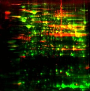 HEK293 HCP antibody coverage procedure: step 6 - overlay image of HEK293 HCP & Anti-HEK293 HCP Western Blot on membrane