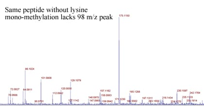 Methylation Site Identification Procedure: step 4A: MSMS showing the absence of immonium ion peak at 126 m/z of Non-methylated peptide